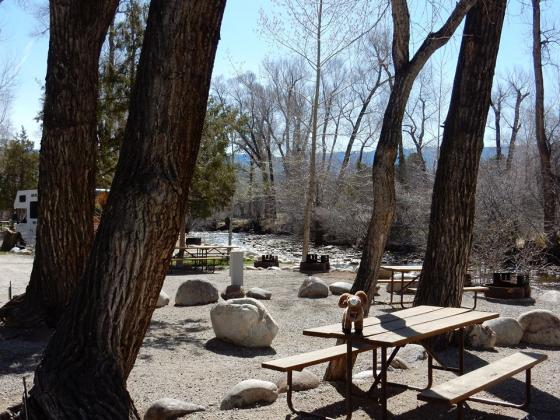 These trees make for great shade in the summer at Chalk Creek Campground!