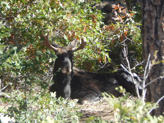 Wildlife at Colorado Heights Campground