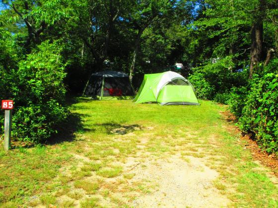Shady Knoll Tent Camping