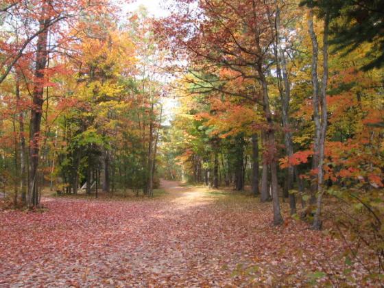spectacular autumn color
