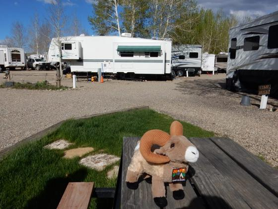 Lots of rooms for RV's at Red Mountain RV