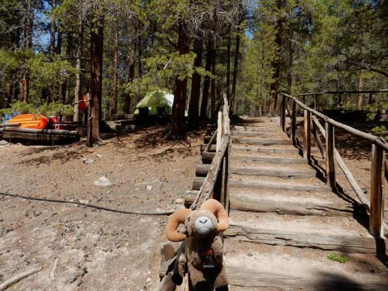 Path from ten site to bathrooms at Sugar Loafin' RV Campground and Cabins
